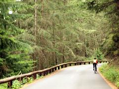 Evergreens line the road (Franklyn W) Tags: pugetsound orcasisland bikeride sanjuanislands pnw mtbaker wsf washingtonstateferry moranstatepark mountconstitution