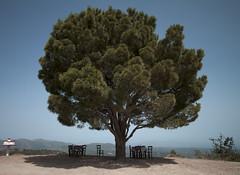 Tree in Crete