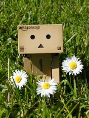 Danbo & Daisies (PhaedraM) Tags: cute daisies danbo danboard