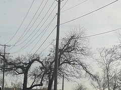 Trees (Photosintheattic (Devy)) Tags: trees lines outdoor branches cable powerline telephonepole telephonewire