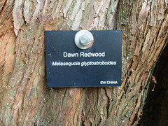 this tree has my name on it! (dawn.v) Tags: uk england tree sign dawn september dorset trunk redwood bournemouth firstsignsofautumn lumixtz25