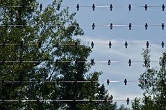 Jardins de Métis (Québec, Canadá). Festival International de Jardines (ipomar47) Tags: jardin metis redford garden san lorenzo river st lawrence grandmetis quebec canada pentax k20d festival international jardines jardins nwn presentacion
