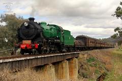 6S75 30/8/14 (Mittens_97) Tags: bridge west heritage train pig north railway class steam nsw express 36 tamworth 3642 nswrtm nswgr