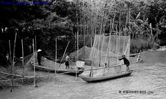 Net fishing on the Rach Ong Chuong, An Giang Province - Photos from Rob Whitehurst 1970-72