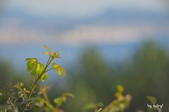Growing Up... - Creciendo... (ndrg) Tags: españa mountain plant blur macro tree art nature landscape arbol photography spain nikon photographer arte bokeh fine 300mm galicia desenfoque micro nikkor montaña tamron 90mm vc ria vigo usd riadevigo 90mm28 moaña ndrg d5100 ndrg2