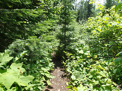 Mount Josephine overgrown trail