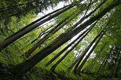 Wald (sabrinaschoenhardt) Tags: wood forest natur grau grn braun holz wald bume ruhe