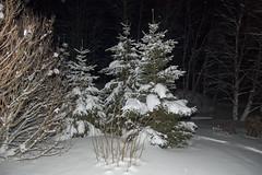 20080225-DSC_5360.jpg (willkayak) Tags: rovaniemi dropbox finlandia circolo polare artico