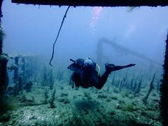 Karwela Wreck, Xatt L´Ahmar, Gozo (yayapapaya77) Tags: plants underwater pflanzen diving malta shipwreck wreck mediterraneansea gozo wrack tauchen unterwasser mittelmeer karwela canonpowershotg15 xattl´ahmar karwelawreck
