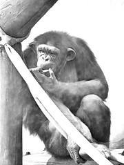 Image6 - Copia (Daniel.N.Jr) Tags: animal selvagem zoologico kodakz990