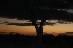 Game Drive_Sunset_Timbavati_Kruger_SA