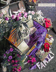 FAMILY (Steve Taylor (Photography)) Tags: city family pink red newzealand christchurch roses flower art birdcage leaves digital shoes purple box letters canterbury case bow nz southisland ribbon cbd crayons suitcase channel flowershow ellerslie