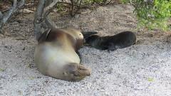 Galapagos - San Cristobal-19