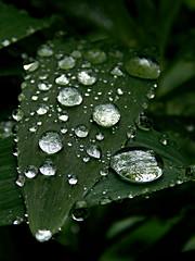 (enibrusnjak) Tags: green nature rain drops diamond