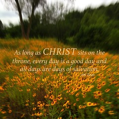 Every day is a good day (Make Me More Worthy Of Thy Love) Tags: flowers field yellow day christ jesus salvation throne biblical counseling johnninetwentyfive