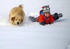Losing the Race (Danny VB) Tags: race snow winter fun slope sliding neige gaspesie quebec canada golden retriever goldenretriever chien downhill downhillrace canon eos 6d action