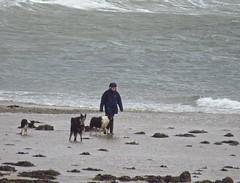 8410 Lady and four dogs - trust me, I'm a photographer! (Andy - Busyyyyyyyyy) Tags: 20170314 bbb beach ddd dogs lady lll loch lochlinnhe sea sss water woman www