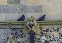 guardians of the gargoyle (I was blind now I see!) Tags: raven brick face gargoyle beak feather mouth nose stone church rose ledge scene