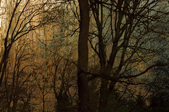 * (sedregh (off for some days)) Tags: canon wald woods landscape landschaft multipleexposure mehrfachbelichtung icm intentionalcameramovement abstrakt abstract