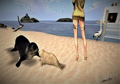 Issues (Sydney Levee) Tags: sim lick designs designe sea pets pet phoque oiseaux birds bird animaux maitreya acean fonds marins submarine sky lelutka lara hurley truth hair fashion cerise glamaffaire paysages lanscapes ile mer