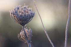 The last Winter sun (Xtraphoto) Tags: morgenstimmung wintersonne wintersun winter ice eis frozen frosty gefroren