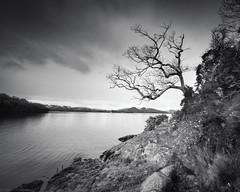 Tree, B&W (strachcall) Tags: lochlomond scotland tree monochrome water lochlomondtrossachs sky blackwhite bw balmaha landscape clouds