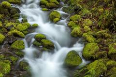 A small creek (roe.nate) Tags: creek stream water longexposure moss rock stone forest oregon pnw