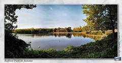 Rufford Country Park : Autumn 2016 (setsuyostar) Tags: ruffordcountrypark nottinghamshire samsunggalaxys7 phonepics autumn2016 november2016 kenhawley
