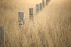 winter gold (Marc McDermott) Tags: fence posts grass gold beautiful winter nature dry light shallow depth field ef135mmf2lusm canada ontario lake