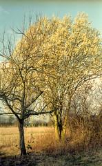 Kiev IIa (salparadise666) Tags: kiev 2a jupiter hannover region calenberger land niedersachsen nils volkmer vintage camera russian spring color 50mm sonnar