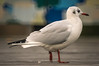Bird (Matt H. Imaging) Tags: ©matthimaging bokeh donutbokeh mirrorlens reflexlens minolta minoltaaf500mmf8reflex 500mm sal500f8 minolta500f8reflex sal500f80 sony slt sonyalpha slta55v a55
