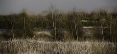 On the other side.. (Coisroux) Tags: nature landscape grasses hillside steepness depthoffield intothedistance birches trees forests lakes skyline d5500 nikond peterborough hamptonvale newts embankment artistic evergreens
