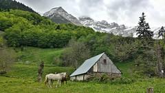 In Gavernie, France (Randy Durrum) Tags: horses france day cloudy samsung gavernie dailyfrenchpod durrum leuropepittoresque snapseed flickrandroidapp:filter=none