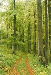 Forest (battel) Tags: summer rain forest trekking woods outdoor hiking hike fjllrven wald wandern harz hasselfelde rappbodetalsperre
