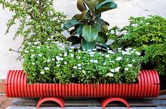 Planter-drain pipe_Urbangardensweb_com (DougBittinger) Tags:
