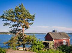 (miemo) Tags: sea summer tree pine finland island helsinki europe cottage olympus hut archipelago omd lonna em5 panasonic1235mmf28