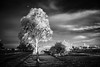 In the shaddows (erglis_m (Mick)) Tags: sunset blackandwhite bw 20d clouds contrast canon ir blackwhite interesting australia canoneos20d infrared australianlandscape digitalinfrared digitalir infraredfilter topsprings sunsetight topspringshotel
