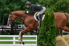 Good Form (hpaich) Tags: horse fence newjersey jump jumping nj competition jersey chestnut hunter horseshow equestrian equine compete equestrienne horseparkofnewjersey horseparkofnj middlesexcountyhorseshow