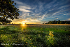 Last rays (Ian Latham) Tags: sunset sky tree green grass evening national trust berkshire maidenhead pinkneys