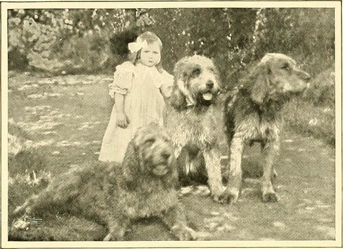 "Image from page 192 of ""The new book of the dog : a comprehensive natural history of British dogs and their foreign relatives, with chapters on law, breeding, kennel management, and veterinary treatment"" (1911)"
