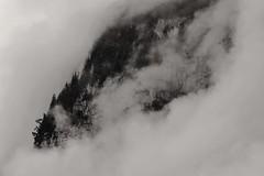 Une pense pour Zao Wou-ki (Valentin le luron) Tags: abstract nature montagne switzerland noir lausanne yves nuage paysage lauterbrunnen berne arbre blanc brouillard rocher brume oberland paudex