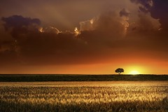 Tree (Radisa Zivkovic) Tags: light sunset red sky sun sunlight plant tree nature field grass weather yellow backlight clouds rural season landscape golden countryside spring farm wheat scenic meadow scene farmland growth pasture crop land organic agriculture plain idyllic cultivated