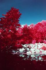 Dow Gardens EIR (scott_z28) Tags: bridge trees orange color film nature water gardens mi landscape ir md minolta kodak michigan 28mm cities surreal slide infrared tri e6 f28 midland false srt101 dow eir 1443 021 rokkor aerochrome