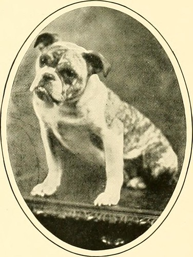 "Image from page 82 of ""The new book of the dog : a comprehensive natural history of British dogs and their foreign relatives, with chapters on law, breeding, kennel management, and veterinary treatment"" (1911)"