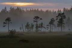 Metmarkmyran (Per_72a) Tags: sunset mist nature fog forest landscape evening sweden skog sverige fen mire norrland solnedgång myr dimma kväll