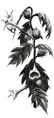 Jimson Weed right (ianulimac) Tags: flowers plants white black art illustration forest pen ink drawing line swamp devil drawn datura herb locoweed inkwash stinkweed atropine scopolamine daturastramonium jamestownweed toxins tolguacha tomwalker hyoscyamine pricklyburr devilssnare poinson tropanealkaloids crookedpinkies crookedpinkiesart devilandtomwalker nightshadehellsbells devil'strumpet devil'sweed devil'scucumber