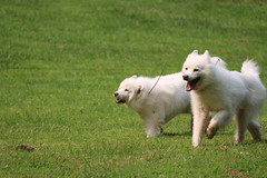 """Jag and Chase On Their Race • <a style=""""font-size:0.8em;"""" href=""""http://www.flickr.com/photos/96196263@N07/14869611516/"""" target=""""_blank"""">View on Flickr</a>"""
