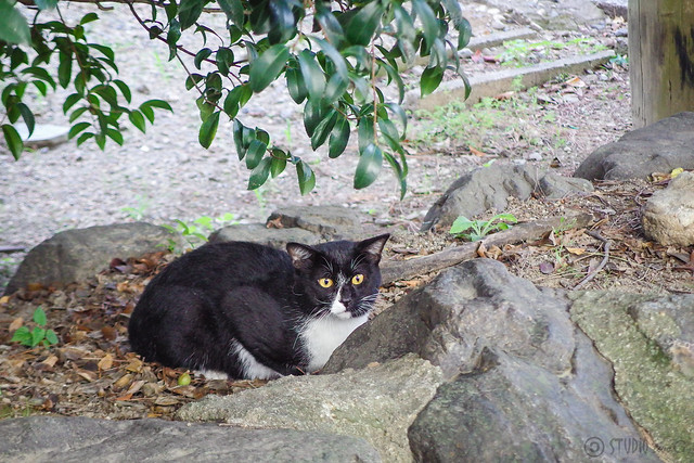 Today's Cat@2014-09-17