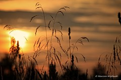 Sunset (Collect Time Not Things) Tags: life sunset nature field shadows village country natura pole polen polonia pologne cienie zachdsoca ka wie rolinno