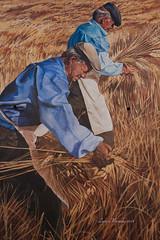 Murale - La mietitura (lumun2012) Tags: sardegna canon eos sardinia 7d murales lucio paints dipinti borore mundula tamronxrdi1750